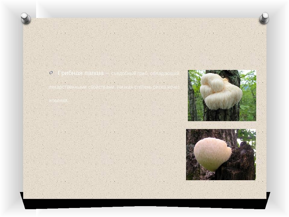 Грибная лапша – съедобный гриб, обладающий лекарственными свойствами. Низкая...