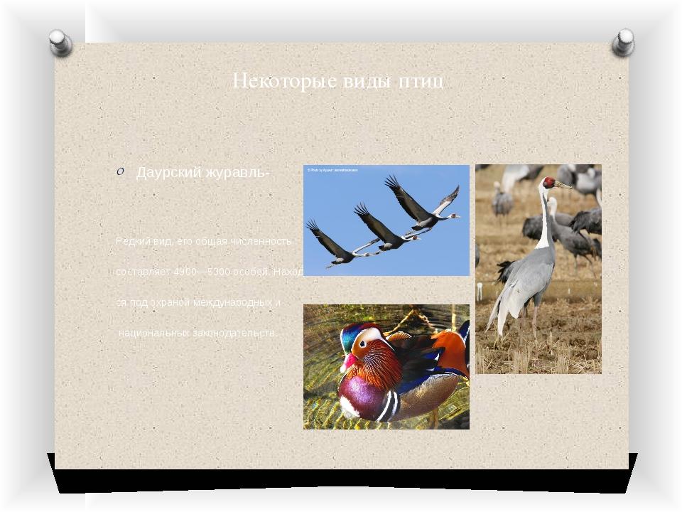 Некоторые виды птиц Даурский журавль- Редкий вид, его общая численность соста...