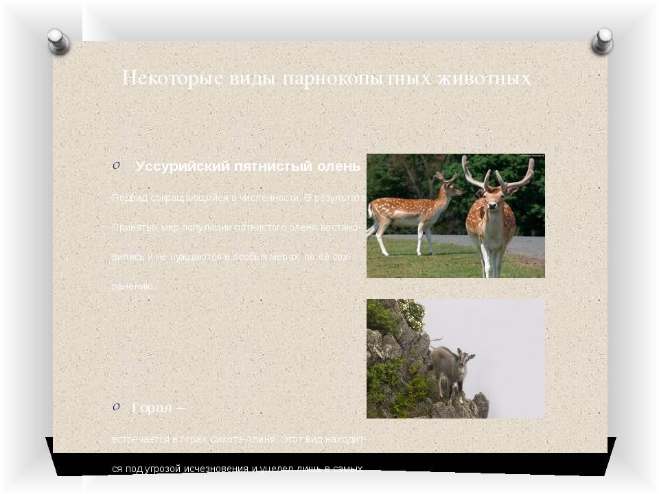 Некоторые виды парнокопытных животных Уссурийский пятнистый олень – Подвид со...