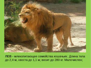 ЛЕВ - млекопитающее семейства кошачьих. Длина тела до 2,4 м, хвоста до 1,1 м;