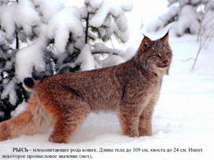 РЫСЬ - млекопитающее рода кошек. Длина тела до 109 см, хвоста до 24 см. Имеет