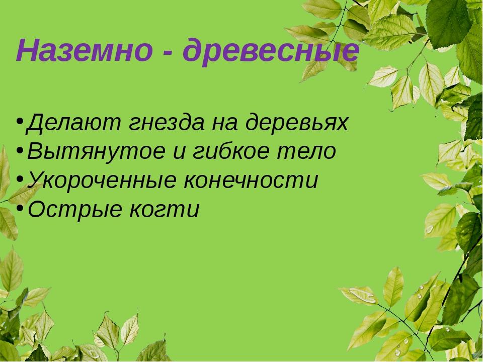 Наземно - древесные Делают гнезда на деревьях Вытянутое и гибкое тело Укороче...