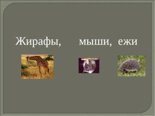 Жирафы, мыши, ежи