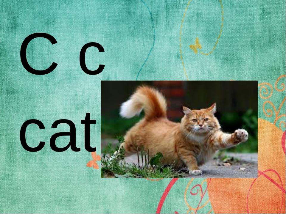 C c cat