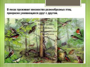 В лесах проживает множество разнообразных птиц прекрасно уживающихся друг с д