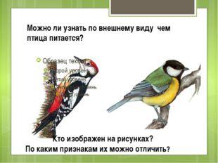 Можно ли узнать по внешнему виду чем птица питается? Кто изображен на рисунка