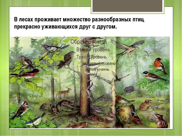 В лесах проживает множество разнообразных птиц прекрасно уживающихся друг с д...
