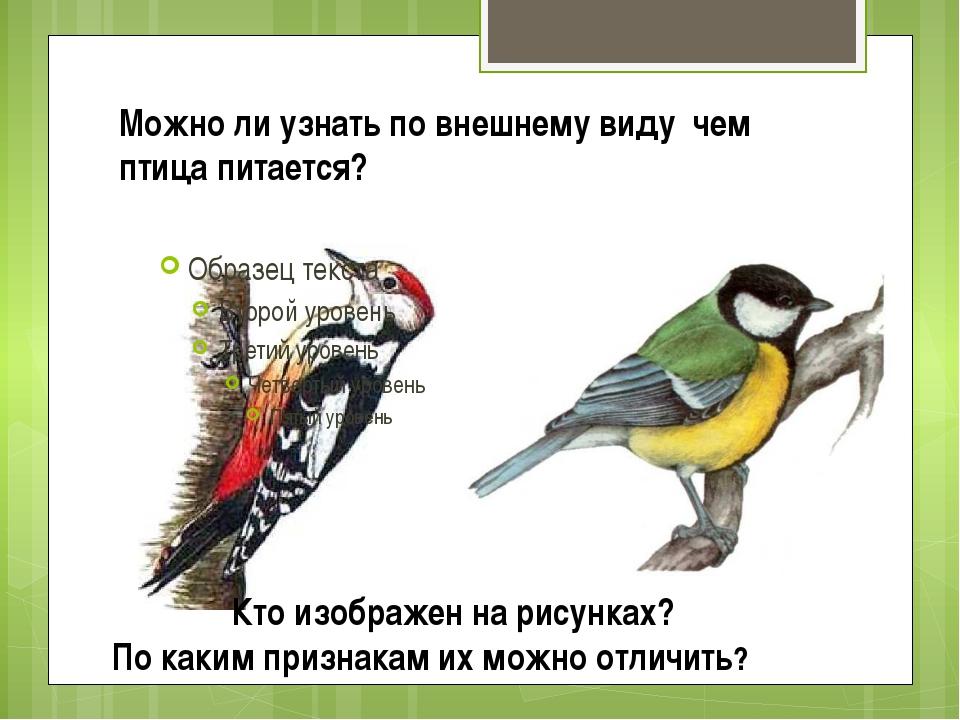 Можно ли узнать по внешнему виду чем птица питается? Кто изображен на рисунка...