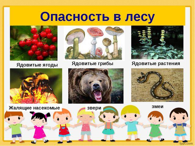 Опасность в лесу Ядовитые ягоды Ядовитые грибы Ядовитые растения Жалящие насе...