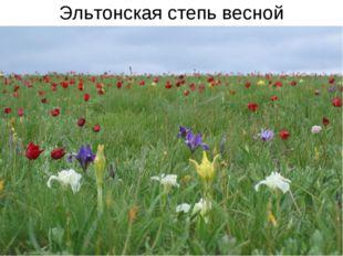 Эльтонская степь весной