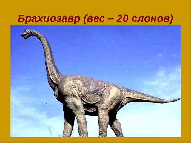 Брахиозавр (вес – 20 слонов)
