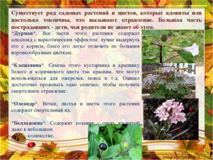 Существует ряд садовых растений и цветов, которые ядовиты или настолько токси