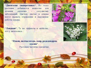 *Дигиталис (наперстянка)*. Из этого растения добывается вещество для лечения
