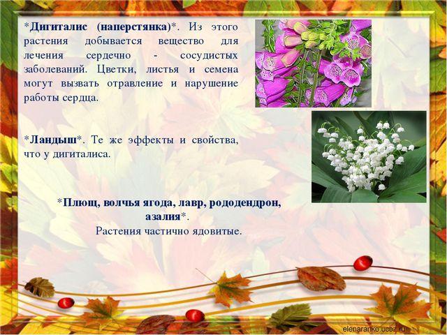 *Дигиталис (наперстянка)*. Из этого растения добывается вещество для лечения...