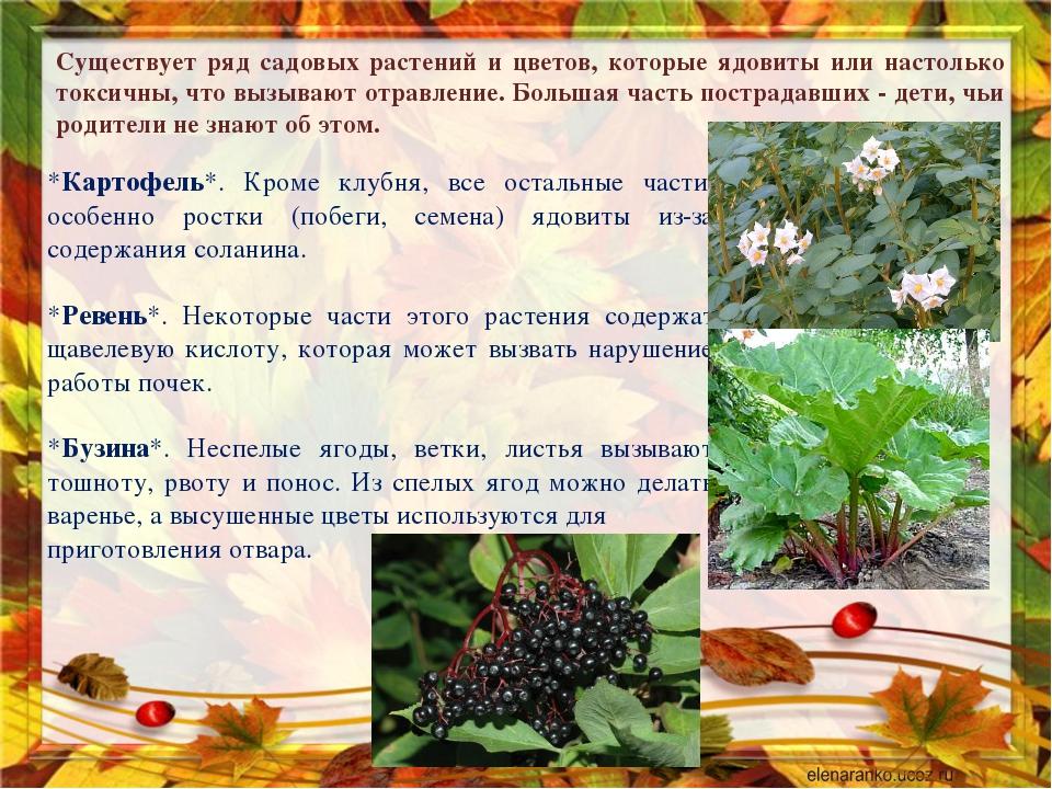 Существует ряд садовых растений и цветов, которые ядовиты или настолько токси...