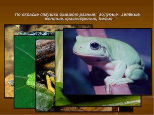 По окраске лягушки бывают разные: голубые, зелёные, жёлтые, краснобрюхие, белые