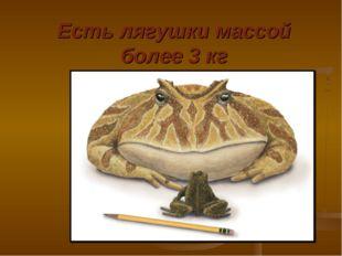 Есть лягушки массой более 3 кг