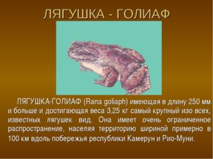ЛЯГУШКА - ГОЛИАФ ЛЯГУШКА-ГОЛИАФ (Rana goliaph) имеющая в длину 250 мм и больш