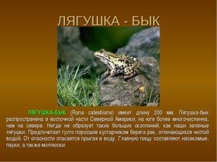ЛЯГУШКА - БЫК ЛЯГУШКА-БЫК (Rana catesbiana) имеет длину 200 мм. Лягушка-бык р
