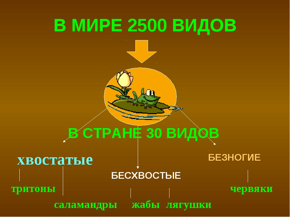 В МИРЕ 2500 ВИДОВ хвостатые БЕСХВОСТЫЕ БЕЗНОГИЕ тритоны саламандры жабы лягу...