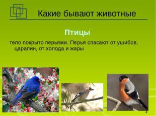 Какие бывают животные Птицы тело покрыто перьями. Перья спасают от ушибов, ца