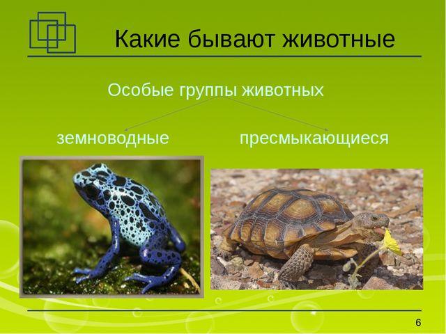 Какие бывают животные Особые группы животных земноводные пресмыкающиеся *