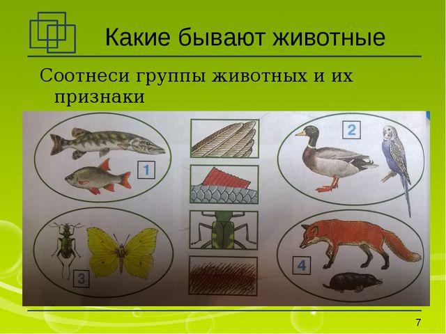 Какие бывают животные Соотнеси группы животных и их признаки *
