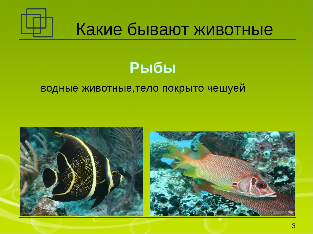 Какие бывают животные Рыбы водные животные,тело покрыто чешуей *