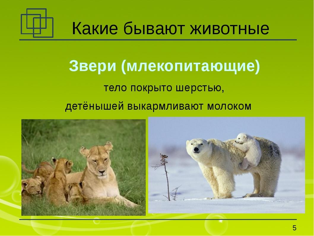 Какие бывают животные Звери (млекопитающие) тело покрыто шерстью, детёнышей в...