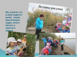 Мы узнали, что в реке водится рыба: окуни, красноперка, судак, много белого и