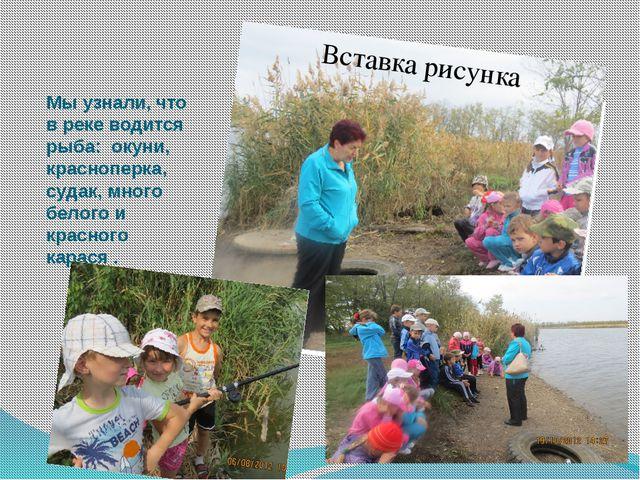 Мы узнали, что в реке водится рыба: окуни, красноперка, судак, много белого и...