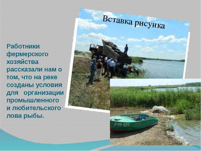 Работники фермерского хозяйства рассказали нам о том, что на реке созданы усл...