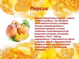 Персик Дерево семейства Розовых, имеет подрод миндаль. От миндаля отличается