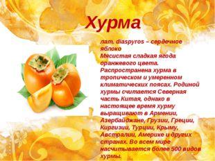 Хурма лат. diaspyros – сердечное яблоко Мясистая сладкая ягода оранжевого цве