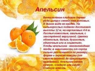 Апельсин Вечнозелёное плодовое дерево рода цитрус семейства рутовых. В диком