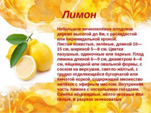 Лимон Небольшое вечнозелёное плодовое дерево высотой до 8м, с раскидистой или