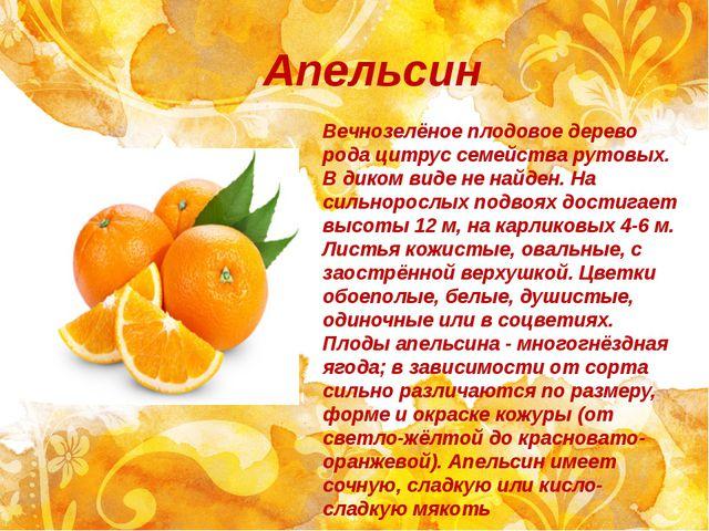 Апельсин Вечнозелёное плодовое дерево рода цитрус семейства рутовых. В диком...