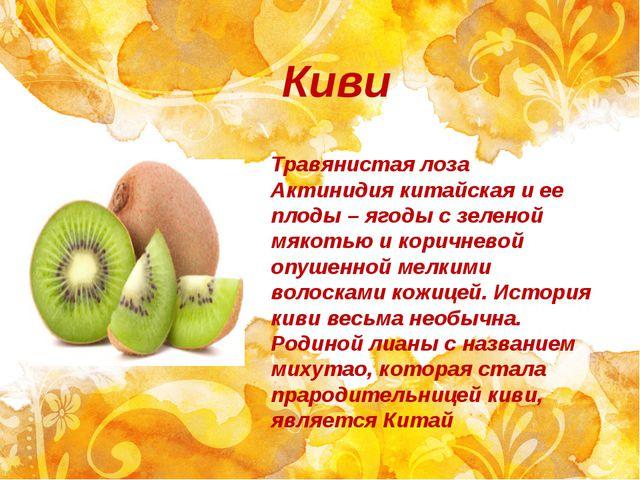 Киви Травянистая лоза Актинидия китайская и ее плоды – ягоды с зеленой мякоть...