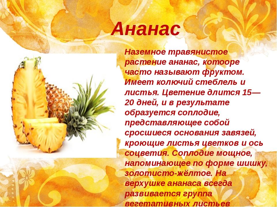 Ананас Наземное травянистое растение ананас, котооре часто называют фруктом....