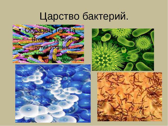 Царство бактерий.