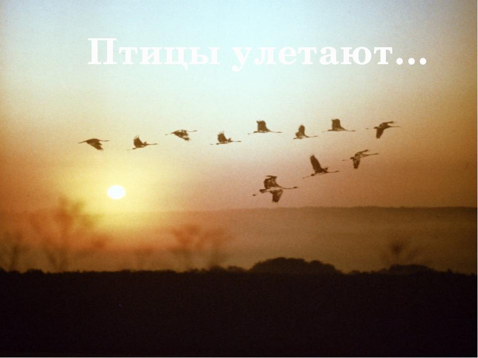 Птицы улетают…
