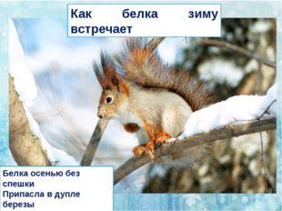 Белка осенью без спешки Припасла в дупле березы Шишки, желуди, орешки. Не ст