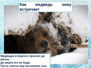 Как медведь зиму встречает Медведик в берлоге проспит до весны - До марта ег