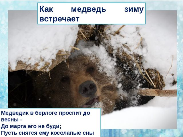 Как медведь зиму встречает Медведик в берлоге проспит до весны - До марта ег...