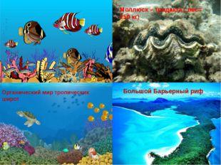 Моллюск – тридакта ( вес= 250 кг) Большой Барьерный риф Органический мир тро