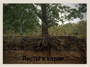 Листы и корни