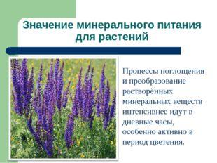Значение минерального питания для растений Процессы поглощения и преобразован