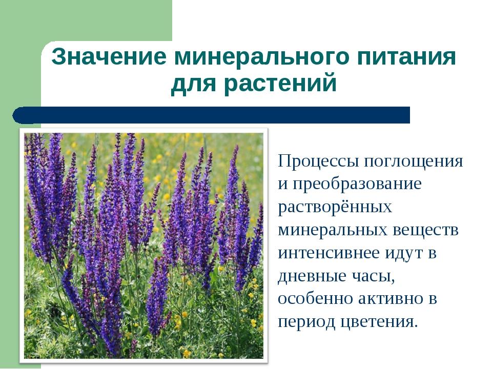 Значение минерального питания для растений Процессы поглощения и преобразован...