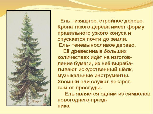 Ель –изящное, стройное дерево. Крона такого дерева имеет форму правильного у...