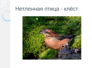 Нетленная птица - клёст